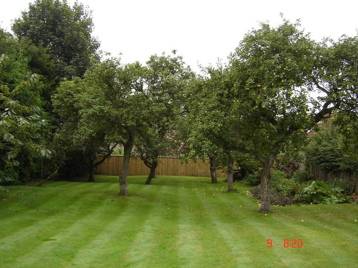 Our lawn through the apple trees